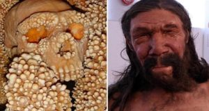 العلماء يكشفون عن وجه الإنسان البدائي في ألتامورا