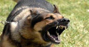 داعش يستخدم الكلاب للانتقام من منشقين في صفوفه