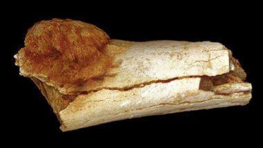 آثار عظام بشرية