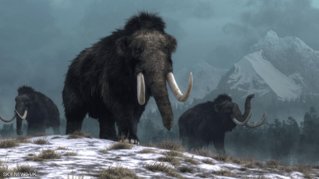 صورة اكتشاف ضخم لهياكل الماموث يفتح الباب أم فك لغز الانقراض